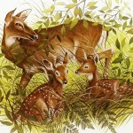White Tail Deer and Fawn